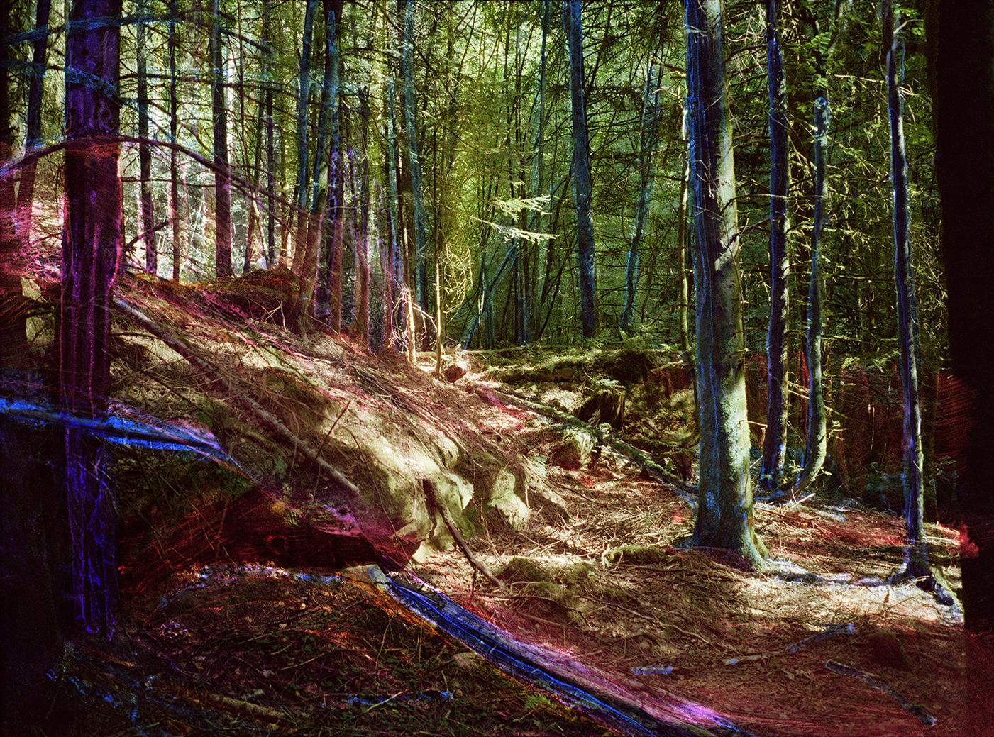 Ceci n'est pas une forêt, France 2020 / the Netherlands 2021